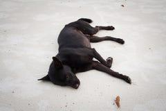 Sommeil comme chien Photographie stock libre de droits