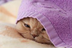 sommeil de chat Images libres de droits