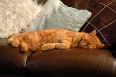 Sommeil de chat. Photos libres de droits