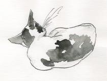 Sommeil de chat, arrière - watercolour Photos stock
