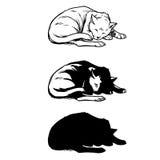 Sommeil de chat de croquis courbé  Image stock