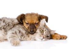 Sommeil de chat et de crabot D'isolement sur le fond blanc Photo stock