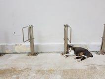 Sommeil de chat paisiblement contre le poteau en métal à l'après-midi paresseux ensoleillé de week-end Photos libres de droits