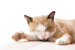 Sommeil de chat sur le fond Photographie stock