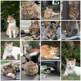 Sommeil de chat sur une chaise Photos libres de droits