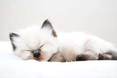 Sommeil de chaton Photo stock