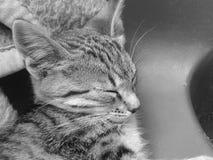 sommeil de chaton Photographie stock libre de droits