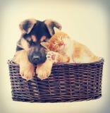 Sommeil de chaton et de chiot Photos stock