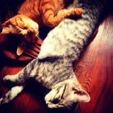 Sommeil de chatons photos stock