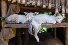 Sommeil de chatons Image stock