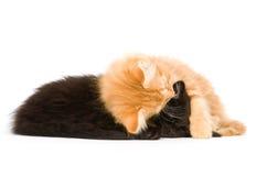 sommeil de chatons Image libre de droits