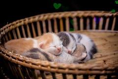 sommeil de chatons dans le panier en bois Images libres de droits