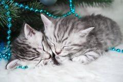 Sommeil de chatons sous l'arbre Noël et an neuf Image libre de droits