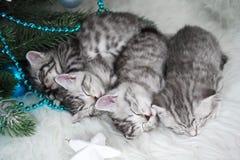 Sommeil de chatons sous l'arbre Noël et an neuf Image stock