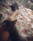 sommeil de chats photos libres de droits