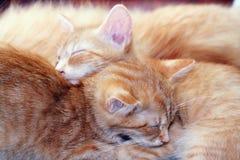 sommeil de chats Image libre de droits