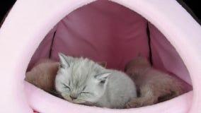 Sommeil de chats dans une tente d'animal familier clips vidéos
