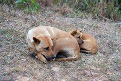 Sommeil de chien égaré et de chiot paresseux sur la colline Image libre de droits