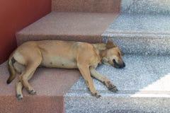Sommeil de chien de Brown sur l'escalier Image stock