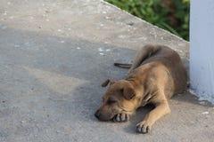Sommeil de chien de Brown sur le bain de pied Photographie stock libre de droits