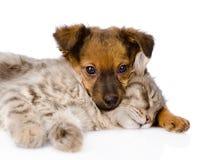 Sommeil de chien et de chat D'isolement sur le fond blanc Photographie stock libre de droits
