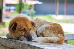 Sommeil de chien sur la chaise en pierre Photos libres de droits