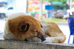 Sommeil de chien sur la chaise en pierre Image stock