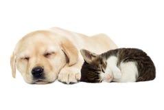 Sommeil de chiot et de chaton Photos libres de droits