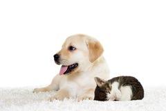 Sommeil de chiot et de chaton Photos stock