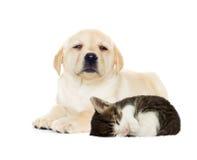 Sommeil de chiot et de chaton Image libre de droits