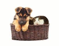 Sommeil de chiot et de chaton Photo libre de droits