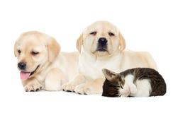 Sommeil de chiot et de chaton Image stock