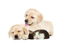 Sommeil de chiot et de chaton Photo stock
