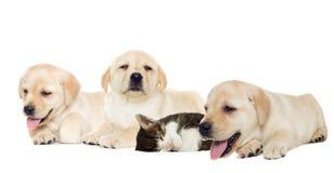 Sommeil de chiot et de chaton Images stock