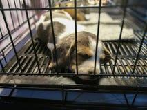Sommeil de chiots à l'intérieur d'une cage Photo stock