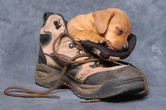 sommeil de crabot Photo stock
