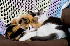 Sommeil de deux chats Image libre de droits