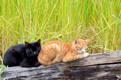 Sommeil de deux chats Images libres de droits