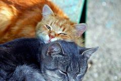 Sommeil de deux chats sur un banc dehors Images libres de droits