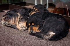 Sommeil de deux chiens de la boutique à Istanbul, Turquie Photo stock