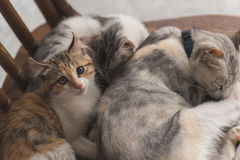 Sommeil de famille de chat Photo libre de droits
