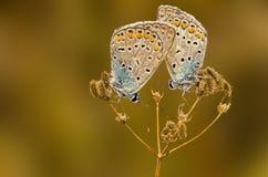 Sommeil de papillon images stock