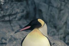 Sommeil de pingouin Photographie stock