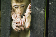 Sommeil de singe de bébé Photographie stock