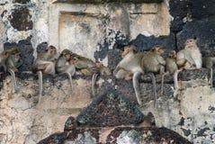 Sommeil de singes au-dessus du temple Photographie stock