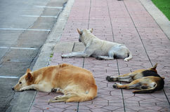 Sommeil de trois chiens sur la rue Photographie stock