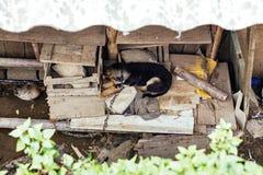 Sommeil enchaîné de chien sur le panneau en bois sous le toit avec la plante verte sur le premier plan en été chez Cat Cat Villag Photo stock