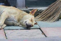 Sommeil errant de chien sur le plancher avec un balai Image stock