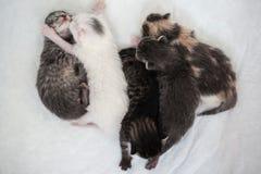 Sommeil heureux du petit groupe rayé de chatons avec un minuscule noir images stock
