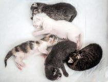Sommeil heureux du petit groupe rayé de chatons avec un minuscule noir images libres de droits